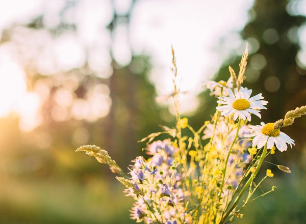 Midsummer by Charlotta Lingwall